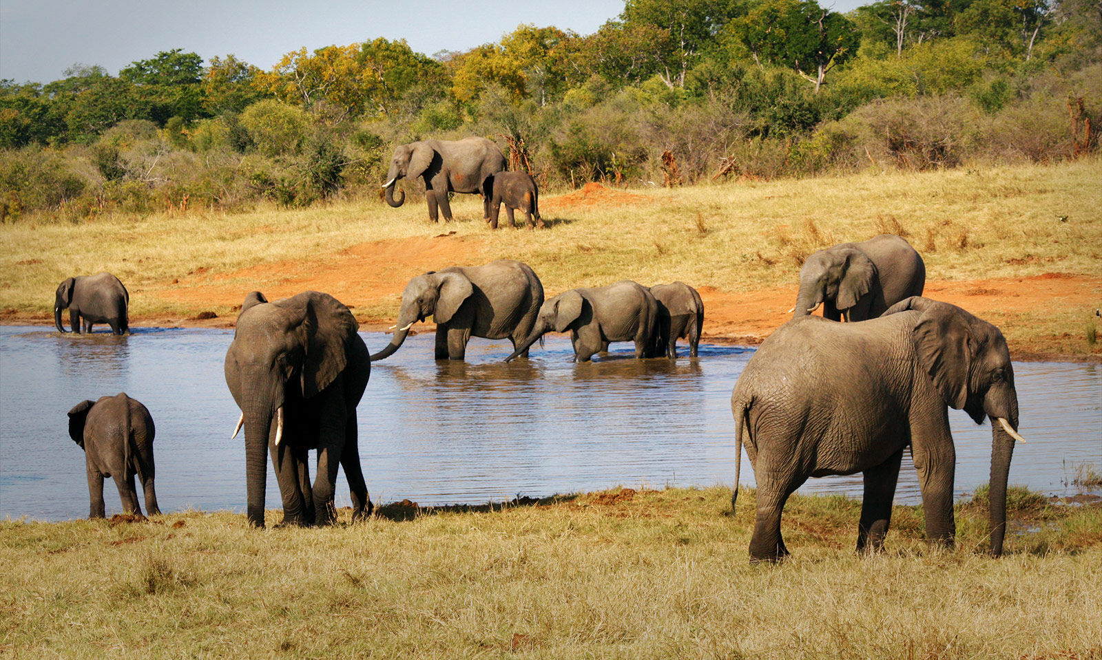 Elephants by a River