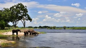 zambezi-national-park-2